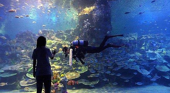 Turkuazoo Turki Sebanyak 10.000 makhluk laut dan hewan air tawar menjadi koleksi aquarium yang berlokasi di pusat perbelanjaan, Istanbul Shopping Mall, Turki ini, mulai dari ikan pari, piranha, hingga hiu. Saat fibuka untuk umum pada tahun 2009, Turkuazoo yang pembangunannya didanai oleh publik ini sempat menjadi aquarium terbesar di dunia dengan tangki terbesar berisi lebih dari 1 3 juta galon air. Di dalamnya juga ada terowongan sepanjang 80 meter.
