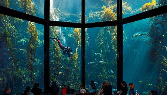 Monterey Bay Aquarium( Amerika Serikat) Trdapat dua tangki super besar setinggi 10 meter yang masing masing berkapasitas 1,2 juta galon air pada Monterey Bay Aquarium. Aquarium yang sangat terkenal ini berada dindaerah Cannery Row, Monterey California, Amerika Serikat dan terbuka untuk umum sejak tanggal 20 oktober 1984. Ada lebih dari 35.000 makhluk laut dengan sekitar 623 spesies, seperti ikan paus, ubur ubur, ikan pari, berang berang laut, tuna dan hiu yang menghuni akuarium ini.