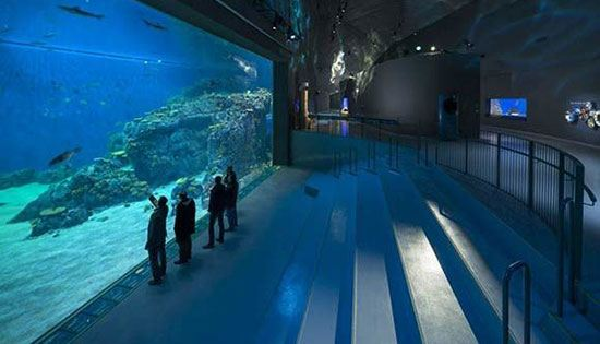 National Aquarium (Amerika Serikat) Sekitar 1,5 juta wisatawan mengunjungi akuarium yang berlokasi di Baltymore, Maryland, Amerika Serikat ini sejak dibuka pada tahun 1981 silam. Lebih dari satu juta galonair mengisi aquarium ini. Sebagai tempat hidup sekitar 16.500 makhluk laut dari 660 species. Selain itu juga terdapat Rainforest Terrarium pada bagian atap aquarium ini. Dengan koleksi yang sangat banyak itu tak heran jika pengunjung selalu memadatinya setiap tahun.