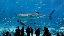 9 Akuarium Terbesar dan Terluas di Dunia. Indahnya Kebangetan