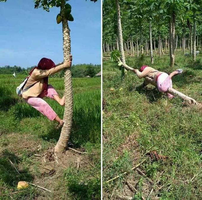 Itu bukan pohon kelapa ya mak! Jadi bisa lentur gitu pohonnya kalau dinaikin.
