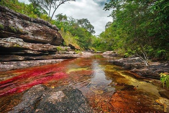 Sungai Cano Cristales Ada lima warna berbeda yang dapat kita lihat di sungai ini. Yaitu hijau, coklat, merah, kuning dan biru di Sungai Cano Cristales Colombia ini. Kadi tidak salah jika sungai ini dinobatkan sebagai salah satu sungai terindah di dunia. Hal ini dikarenakan tumbuhnya ganggang warna warni di dasar sungai. Banyak wisatawan yang berkunjung di sungai yang bebas dari sampah ini.