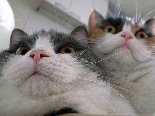 Kucing aja berpasangan, masa kalia kalah sama kucing sih!