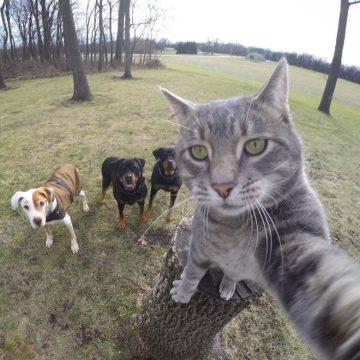 Nah, gitu dong daripada berantem terus mending foto selfie bareng gini kan enak dipandang.