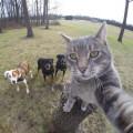 Nggak Hanya Anak Kekinian Saja yang Pandai Selfie, Kucing Juga Lho!