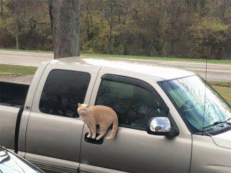 Si kucingnya mungkin terinspirasi dari sosok Spiderman nih Pulsker sampai bisa nempel kayak gitu di pintu mobil.