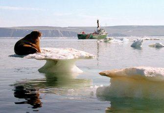 Singa laut dengan satainya duduk di tengah-tengah bongkahan es yang lagi menipis.