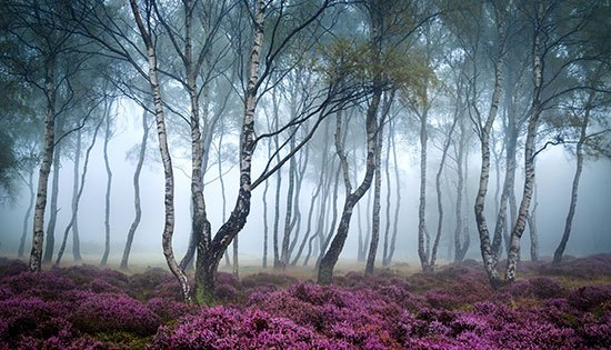 Stanton Moor(Inggris) Sebenarnya hutan ini sangat indah dengan bunga berwarna ungu dengan pohon berkabut. Stanton Moor adalah dataran tinggi kecil di Derbyshire Peak District Inggris Utara. Kesan misterius mungkin datang dari tanah tegalan (Moor) yang dikelilingi lingkaran batu Zaman Perunggu dan bebatuan lain. Serta suasananya yang senyap sepanjang waktu.