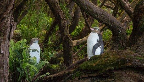 Rata Forest (Selandia Baru) Pohon pohon dengan batang yang keriput bercabang banyak menjadi penghuni hutan ini. Sehingga tampak seperti negeri penyihir yang menyeramkan dalam dunia dongeng. Pohon pohon itubsebenarnya bernama Rata salah satu jenis pohon di hutan itu. Yang kemudian dijadikan nama hutannya. Rata forest yang terletak di Pulau Enderby ini.