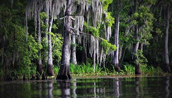 Moss Swamp (Rumania) Wilayah Rumania memang terdiri dari banyak pegunungan dan hutan yang indah. Namun Moss Swamp layak disebut misterius karena tempatnya tidak diketahui secara pasti hingga saat ini. Kawasan ini merupakan rawa rawa berlumut di tengah hutan yang dikelilingi pohon pohon kecil nan tinggi. Jika beruntung menemukannya memang serasa di negeri dongeng.