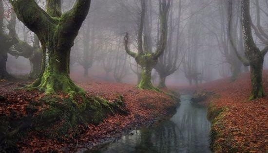 Otzarreta Forest (Spanyol) Bagian dari kawasan cagar alam Garbea Natural Park yang terkenal sangat indah ini terletak di Basque Spanyol. Otzarreta Forest lebih dikenal sebagai hutan dengan kesan mistis yang kental karena keberadaan pohon pohon sangat aneh berbentuk unik yang mengelilinginya. Pepohonan kuno itu bercampur dengan suasana berkabut yang terus menyelimuti hutan ini.