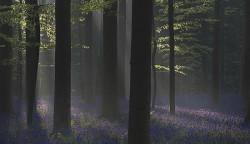 9 Hutan Paling Misterius di Dunia yang Membuat Penasaran, Bikin Jantung Seperti Genderang Perang