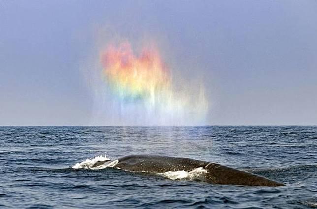 Semprotan air yang dari ikan paus seperti pelangi.