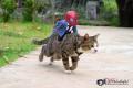 Potret Gokil Kalau Seandainya Spiderman Berkolaborasi dengan Kucing