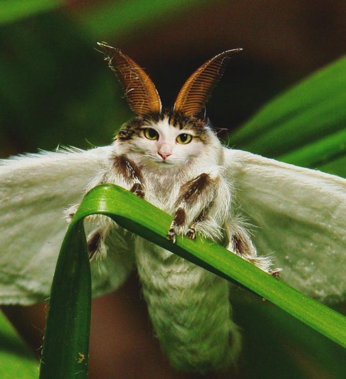 Sekarang berubah jadi kupu-kupu lucu. Wah, unik juga ya kalau kucingnya digabung dengan hewan lainnya.