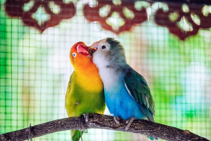 Mereka juga nggak kalah manjanya lho. Wah, benar-benar romantis ya Pulsker aksi hewan-hewan ini. Kalah nih para jomblo ngenes. Hewan aja punya pasangan, masa kalian nggak?.