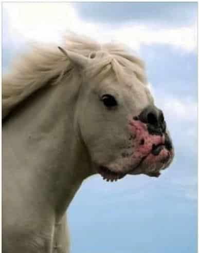 Mungkin ini hasil dari perkawinan silang antara kuda dan anjing.