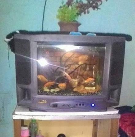 TV? Bukan lagi, karena ini TV tabung yang udah dimanfaatkan menjadi akuarium. Kreatif juga ya?