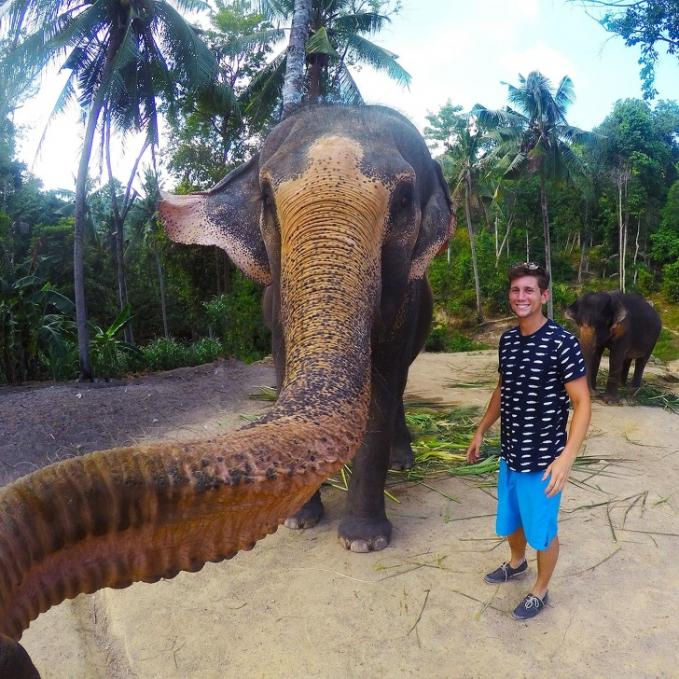 Inilah yang terjadi ketika gajah mengambil foto selfie.