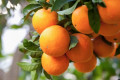 Bukan Jeruk. Ternyata Ini 4 Buah Yang Kandungan Vitamin C Paling Tinggi.