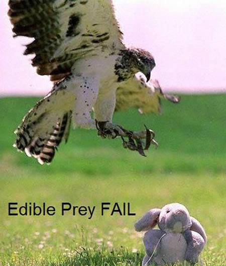 Capek-capek terjun bebas ke daratan, eh pas di dekatin ternyata boneka. Kesel banget pasti tuh si elangnya.