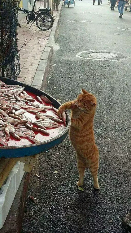 Duh kasihan ikannya berantakan bantuin bersiin ahhh