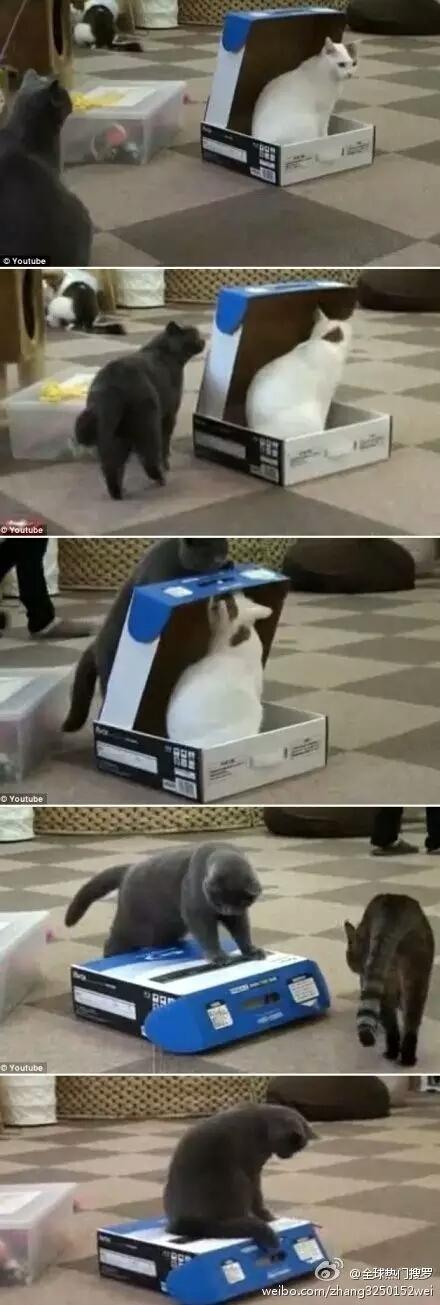 Ini kotak sepatuku. Sepatuku mana?