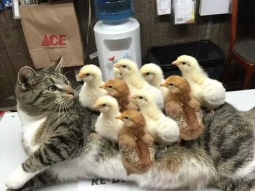 Lho kok semua jadi nganggep aku ibukata kucing.