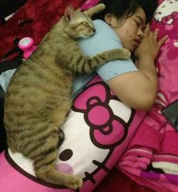 Gemesin Banget Kelakuan Kucing ini Bikin Gagal Paham