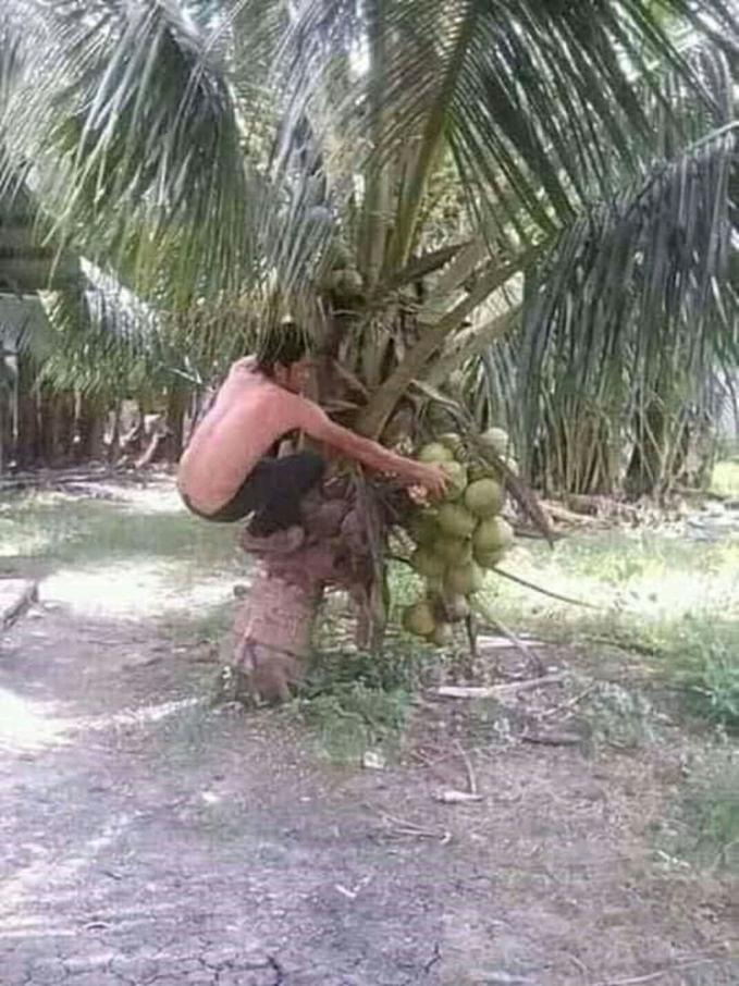 Padahal kelapanya pendek kenapa pake dipanjat?