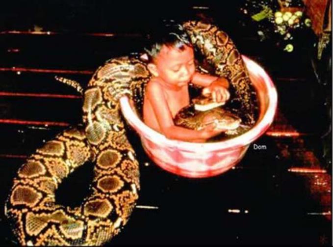 Dengan santainya, anak ini mandi bareng seekor ular raksasa peliharaannya.