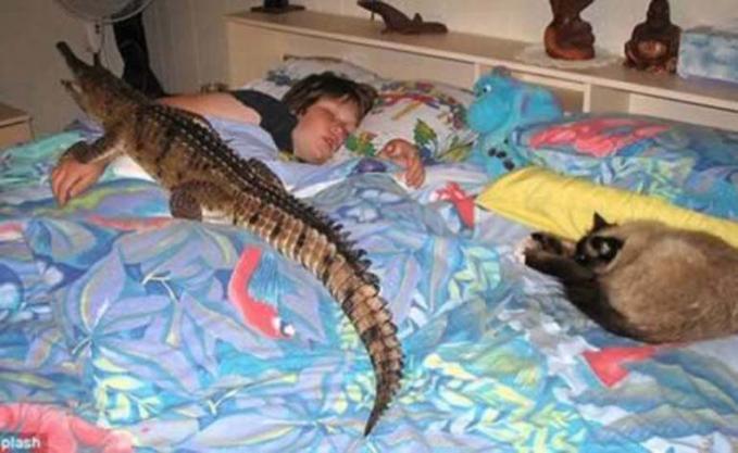 Kalau tidur sama anjing atau kucing sih itu biasa aja, nah kalau sama buaya gini?.