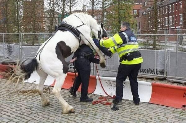 Si kuda sepertinya udah nggak tahan lagi buat ngelepasin hasrat terpendamnya selama ini. Akhirnya dia pun kalap sob.