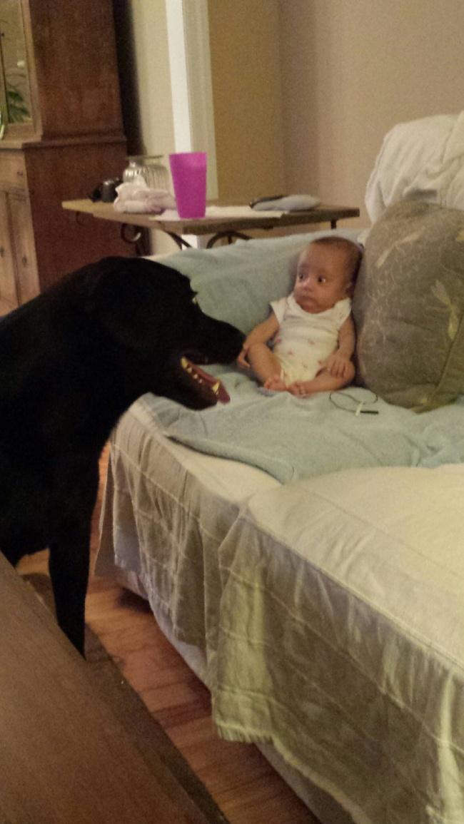 Entah apa yang ada di pikiran anak kecil itu ya gengs. Pasti ketakutan banget tuh ngeliat anjing barunya. Kenalan dulu makanya.
