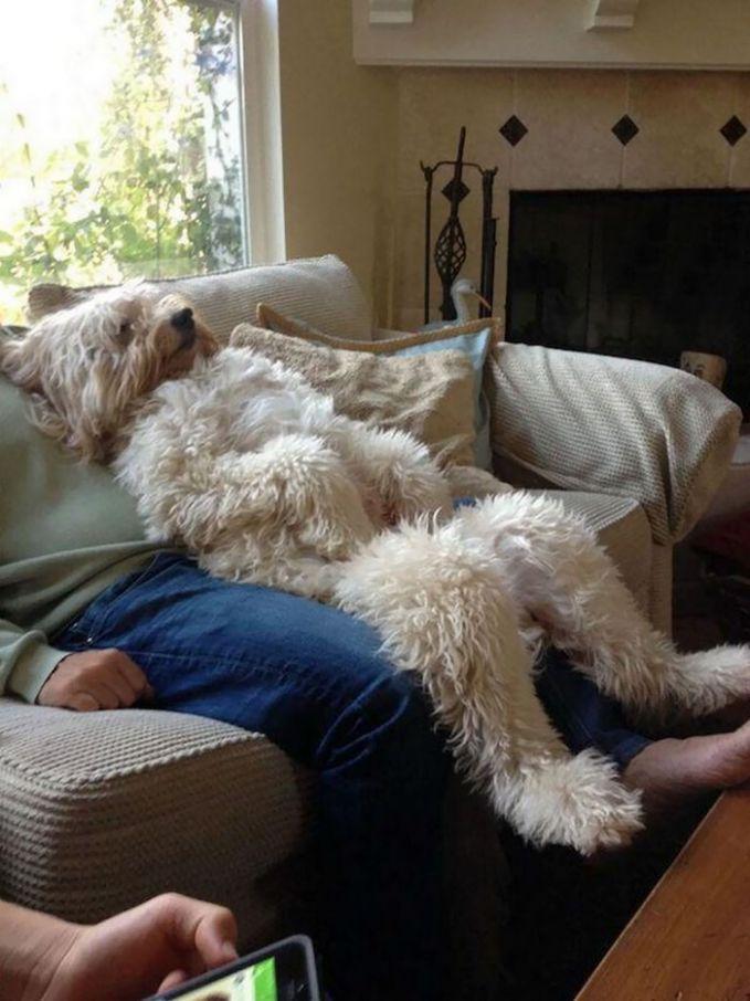 Ini tipe-tipe anjing peliharaan yang manja gaes. Maklum, udah lama nggak main-main sama pemiliknya karena sibuk. Jadi dipuas-puasin deh.