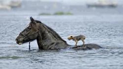 Potret Hewan yang Rela Menolong Sesama dan Manusia, Bikin Salut !