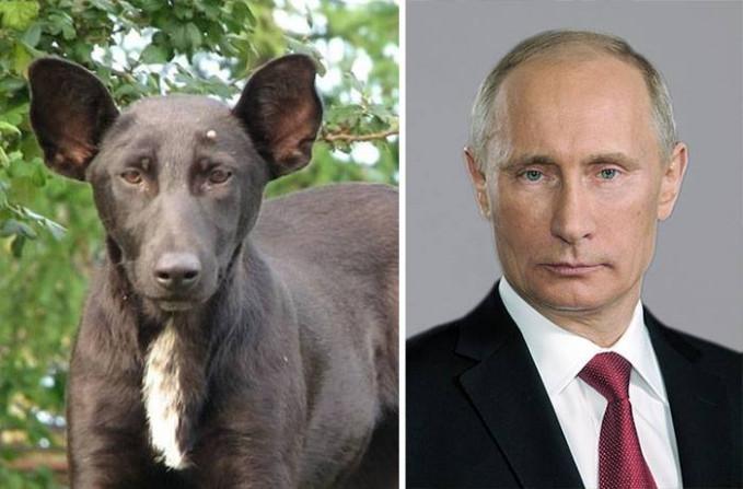 Waduh, pak Putin rupanya ada yang mirip juga nih gengs. Hmm, gimana menurut kalian Pulsker?. Berapa persen kemiripan hewan-hewannya dengan para tokoh dunia ini?.