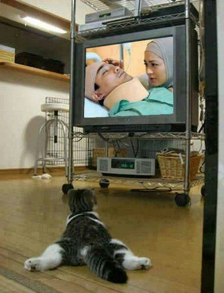 Nah lho kucing yang suka drama sinetron. Asik banget gaya lo
