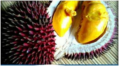 Buah Lahung Tak mudah mendapatkan buah ini. Bentuknya seperti durian di bagian luarnya. Namun uniknya kulit ini berwarna merah. Buah di dalamnya berwarna kuning. Rasanya pun tak beda dengan buah durian.