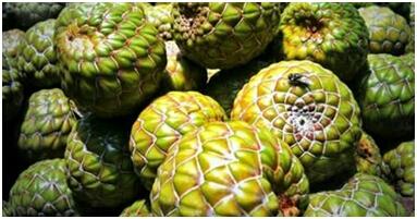 Buah Rumbia Kalau buah Rumbia banyak terdapat di Indonesia karena rumbia adalah pohon sagu. Jadi buah rumbia adalah buah yang dihasilkan dari pohon sagu. Rasanya manis manis sepet. Biasanya diasinkan dulu untuk menghilangkan rasa sepetnya.