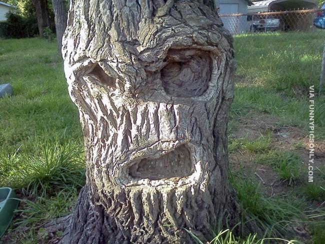 Pohonnya seperti punya sepasang mata dan mulut berukuran besar guys.