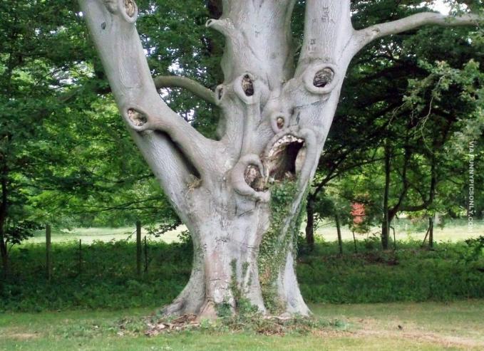 Kira-kira bentuknya seperti apa ya nih pohon?.Emang ya guys, kalau ditelusuri lebih lanjut alam memang menyimpan misteri dan keunikannya tersendiri.