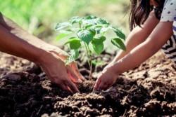 4 Pohon Kaya Manfaat Ekonomi dan Lingkungan Namun Terancam Punah