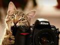 Ternyata Kucing Juga Bisa Ngambek Lho, Ini Dia Foto-Fotonya!