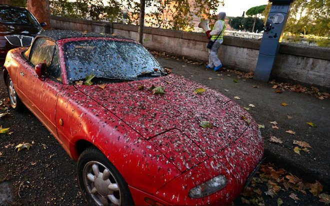 Entah apa yang terjadi, yang jelas sepertinya burung-burungnya suka buang kotoran di mobil merah ini.
