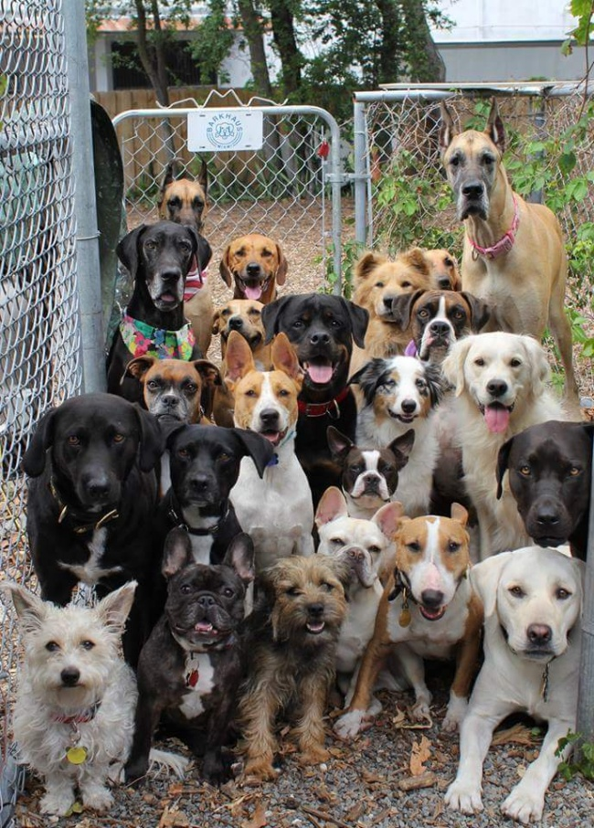 Lah, ada apa nih kok anjingnya bawa pasukan sekompleks kerumah?. Pasti nagih jatah makan.