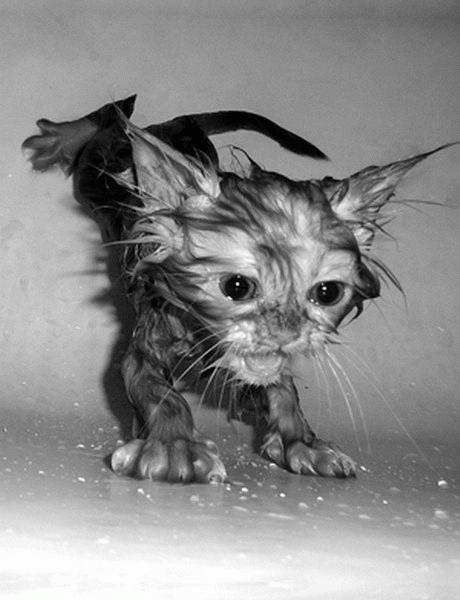 Awas, anak kucingnya bisa berubah jadi catmonster gengs