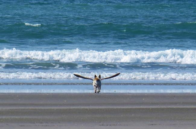 Minggir, si anjingnya mau terbang nih layaknya pegasus si kuda terbang.