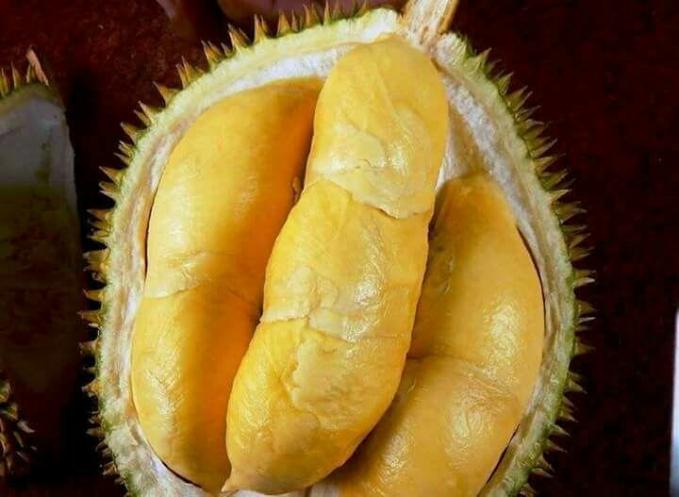 Durian Montong Durian Montong banyak ditemukan di berbagai tempat di Indonesia. Ciri dari buah ini adalah daging buahnya tebal, dan rasa dagingnya sangat manis. Beratnya bisa 13 kilo. Dagingnya kuning cerah, bahkan ada pula yang kuninngnya agak pucat. Justru jika warna dagingnya kuning agak putih pertanda dagingnya manis dan legit. Maka harganya pun lebih mahal.