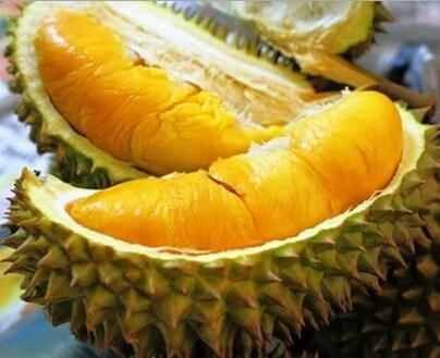 Durian Musang King Durian ini berasal dari Malaysia. Yang dapat tumbuh subur di daerah yang bersuhu 30-35 derajat celcius. Banyak orang yang suka dengan durian ini karena dagingnya yang besar, tebal dan teksturnya sangat lembut. Warna daging buahnya kunong terang bahkan kalau dimakan rasanya sangat legit.